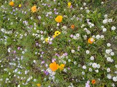 Harmonie de couleurs dans un jardin.