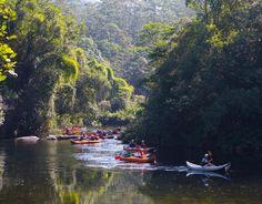 O parque se tornou uma prova de que é possível recuperar a floresta e proteger a fauna e flora.