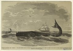 """Whaling adventure -- the """"flurry."""" From New York Public Library Digital Collections."""