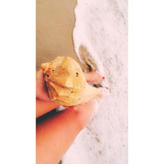 Huge beautiful seashell