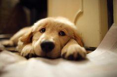 ¿Qué tienen que ver los perros con la adoración a la Eucaristía? El obispo Fulton Sheen encontró una bella relación entre ellos un día en que se sentía desanimado y le costaba rezar. Llevaba...