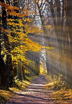 Light Rays on Wooded Path Beautiful World, Beautiful Places, Trees Beautiful, Amazing Places, Light Rays, Sun Rays, Walk In The Woods, All Nature, Pathways