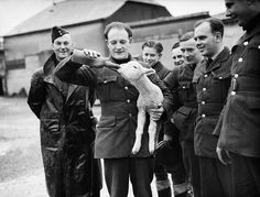 Aloysius the Lamb A R.A.F squadron adopted a lamb as a mascot and named him Aloysius. The lamb and one of the sergeants quickly became best friends. (18th December 1939)