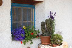 finestrella infiorata e piante grasse   Flickr - Photo Sharing!