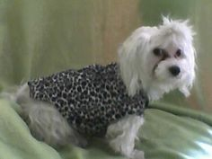 How to make a dog outfit. Clothes For Dogs - Step 5