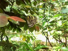 A wonderful experience in viewing a lot of butterflies in a garden. Sweet Girls, Butterflies, Plant Leaves, Park, Garden, Nature, Plants, Travel, Garten