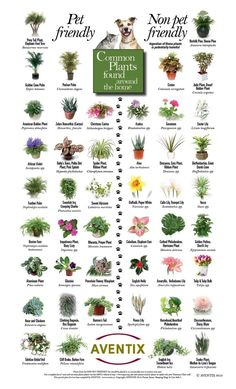 Plants that are safe/not safe for pets.