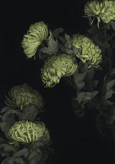 Galerie Schlichtenmaier - Werke Green Flowers, Beautiful Flowers, Night Garden, Floral Photography, Kew Gardens, Botanical Art, Belle Photo, Shades Of Green, Planting Flowers