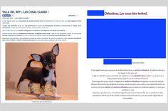 Chihuahuas Love - Copiar Contenido de Este Blog. Si Copias, Eres Nuestro Seguidor.