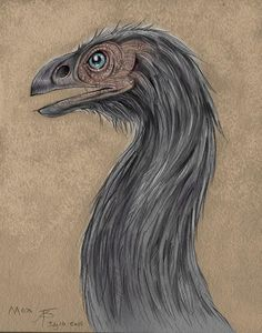 Moa by Ned Barraud Wellington New Zealand, Flora And Fauna, Dinosaurs, Childrens Books, Illustration Art, Children's Books, Children Books, Baby Books