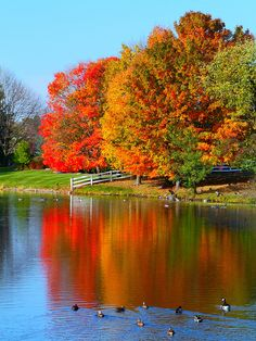Autumn....would love this literally painted on a canvas, one of God's beautiful creations.