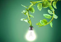 Dutch Company Powers Street Lights with Living Plants