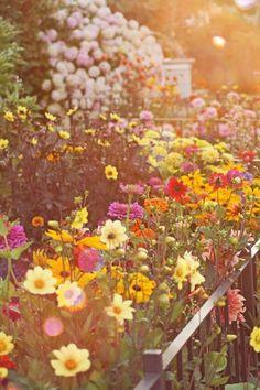 Farm Girl Studios: A Cutting Garden, plant an easy to reach flower garden just for taking cuttings    Cutting Garden  Cut flowers  Flower Gardening