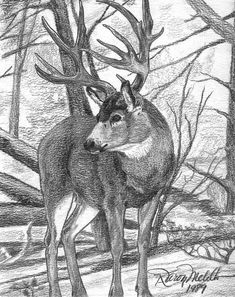 Mule deer buck drawing by karon melillo devega