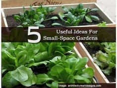 5 Useful Ideas For Small-Space Gardens - Plant Care Today