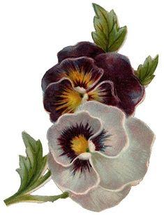 0free-pansies-vintage-flowers.jpg 368×480 pixels