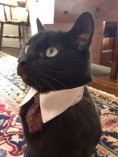 black cat in a suit