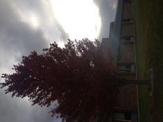 The autumn colors are amazing in NE. This is a tree @ the community college I instruct classes at adjunct.