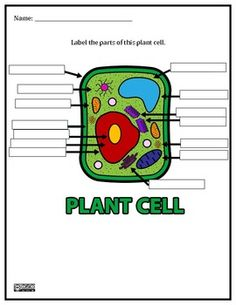 Printables Blank Plant Cell Worksheet the plant middle and school life on pinterest