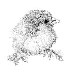 Coloring for adults - Kleuren voor volwassenen Colouring Pages, Adult Coloring Pages, Coloring Books, Animal Drawings, Pencil Drawings, Art Drawings, Chicken Art, Beautiful Drawings, Illustrations And Posters