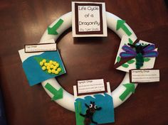 Life Cycle of a dragonfly project.
