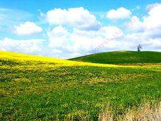 Scansano. Maremma Toscana.