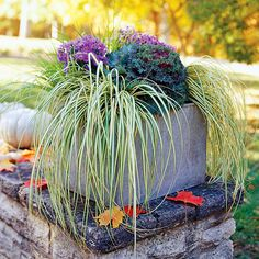 Use ornamental grasses such as carex in your fall containers. See more grasses: www.bhg.com/gardening/flowers/perennials/ornamental-grasses1/?socsrc=bhgpin101112