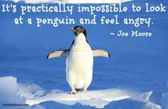 Penguin quote via www.KatrinaMayer.com