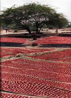 Dyeing textiles, Rajasthan, India