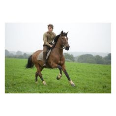 War Horse Movie Review ❤ liked on Polyvore featuring animals and horse