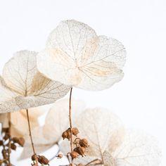 Dried Hydrangea Still Life Modern Florals by TwoStoryHouse on Etsy, $12.00