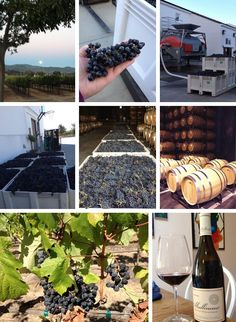 An inside look at #napaharvest at Chimney Rock Winery. #harvest2013 #napavalley