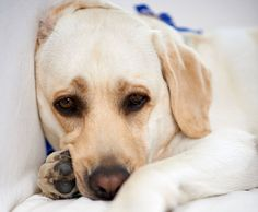 Arthritis In Dogs: Signs Your Dog Has Arthritis And Tips Ease Your Dog's Pain Signs Of Arthritis, Prevent Arthritis, Yoga For Arthritis, Natural Remedies For Arthritis, Types Of Arthritis, Arthritis Symptoms, Psoriatic Arthritis, Going Through The Motions, Basic Yoga
