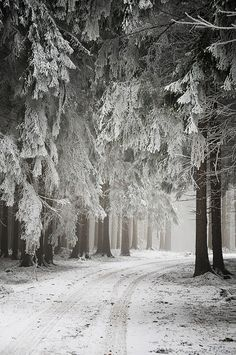 Path through wintry woods