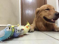 ALLPE Medio Ambiente Blog Medioambiente.org : Un perro, un hamster y ocho pájaros (amigos)