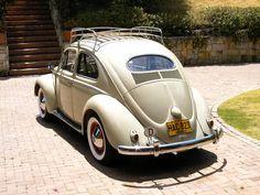 vw bugs | 1954 Volkswagen Beetle - Pictures - Picture of 1954 Volkswagen Bee ...