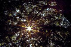 #sun #threes