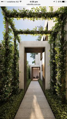 Walkway just add uplighting #modernlandscapedesigntips