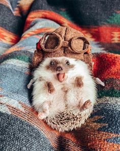 I heard the you might had a bad day so heres a cute hedgehog Cute Wild Animals, Baby Animals Super Cute, Cute Baby Dogs, Baby Animals Pictures, Cute Dogs And Puppies, Cute Little Animals, Cute Animal Pictures, Cute Funny Animals, Cutest Animals
