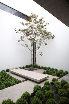 courtyard with tree and concrete slabs and bench. The Casa Ovalle Salinas by Jorge Figueroa Asociados.Small courtyard with tree and concrete slabs and bench. The Casa Ovalle Salinas by Jorge Figueroa Asociados. Modern Landscaping, Backyard Landscaping, Landscaping Ideas, Landscaping Software, Small Gardens, Outdoor Gardens, Zen Gardens, Minimalist Garden, Minimalist Landscape