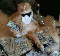 Wie heißt das alte Sprichwort so schön: A Cat With Cash a Day Keeps The Doctor Away     Nun ja, das stimmt nicht s ganz, aber Lachflashs sind ja bekanntlich auch gut für die Gesundheit  Dieses Internet ist schon lustig, und man glaubt es kaum, wofür die Menschen so alles Zeit haben.