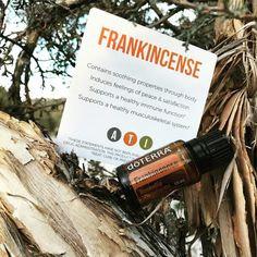 👑FRANKINCENSE👑 The K