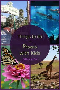 Things to do in Phoenix with kids when on a family holiday in Arizona. https://toddlersontour.com.au/fun-things-to-do-with-your-kids-in-phoenix/