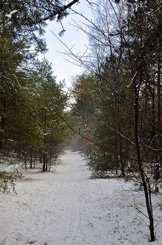 Winterse bossen in Salland