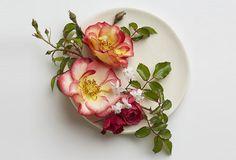 Ruusupuu