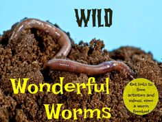 Get your students' attention, and teach the Common Core at the same time! Get great video and activity links on this post, plus a worm lab record sheet freebie!