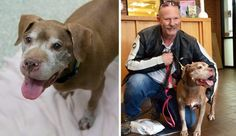 Julep's story is all too common. The senior Pit Bull-type dog found herself in the care of Humane Rescue Alliance (HRA) in Washington D.C. at the end of February when her elderly owner passed away. What set Julep apart – and …
