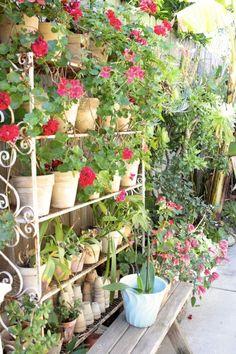 Gardens on Shelves:  The New Vertical Garden Trend?   The Gardenist
