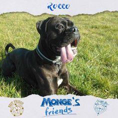 Rocco #Mongesfriends