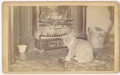 Dighton The Cat with Rat in Raynham Massachussetts 1890's Cabinet Photo   eBay